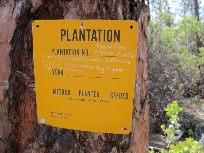 sign indicating pine plantation dates and other info nailed to a tree