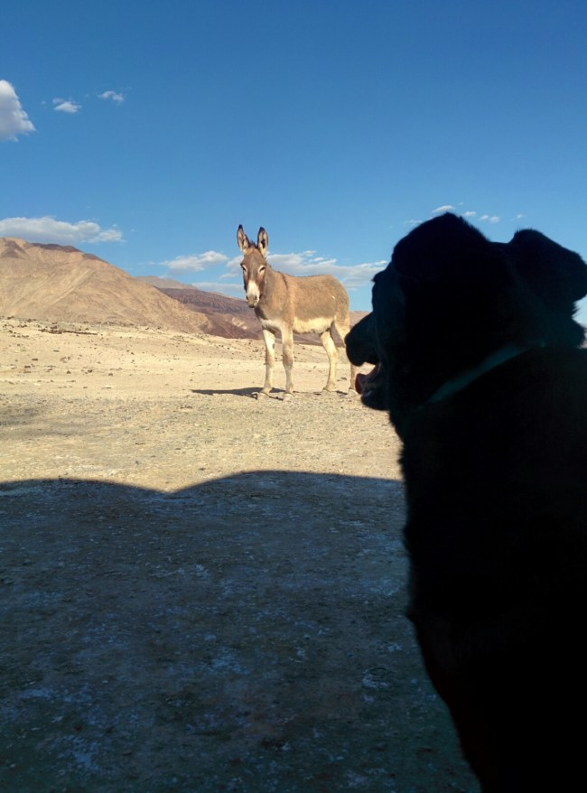 burro taking a look at Willow