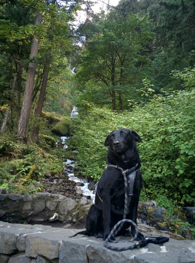Willow at the base of Wahkeena Falls