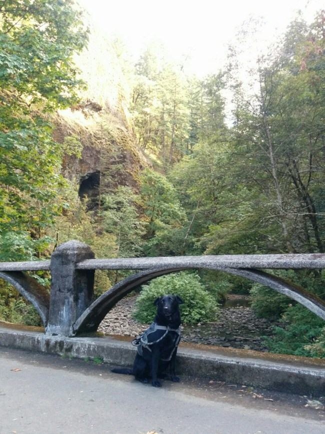 On The Bridge Looking Up Oneonta Gorge