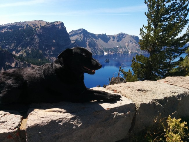 WIllow laying on a rock wall with Phantom Ship Island at the tip of her nose in the background