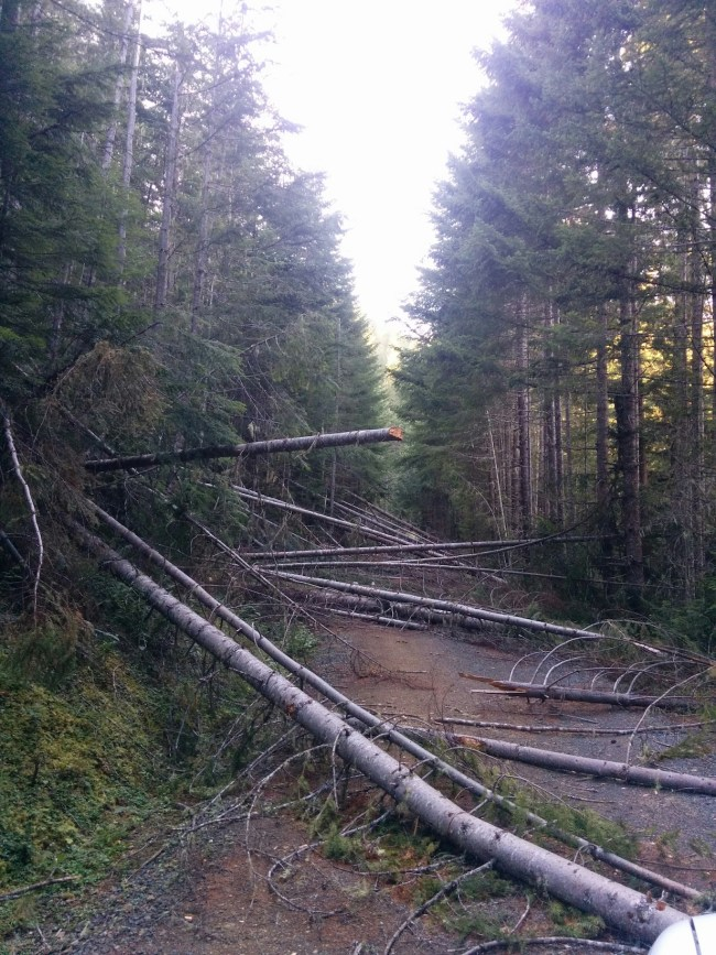 bunch of trees felled across a forest service road