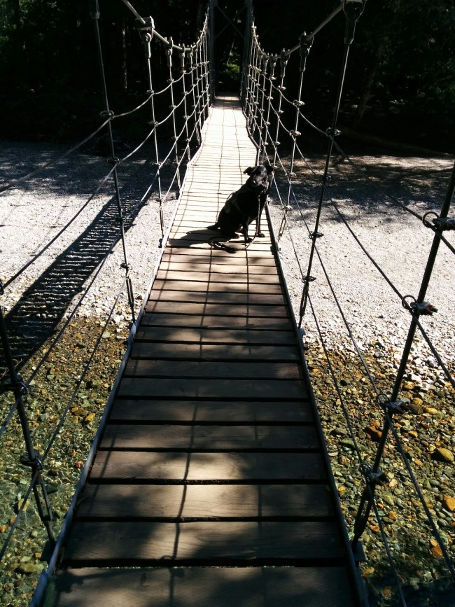 Willow On The Suspension Bridge