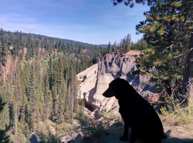 Another Pic Of The Ghost Dog In Front Of Some Pinnacles