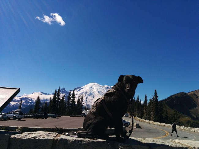Willow sitting on another rock wall overlook Mt. Rainier from Sunrise point