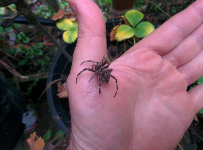 spider on my hand
