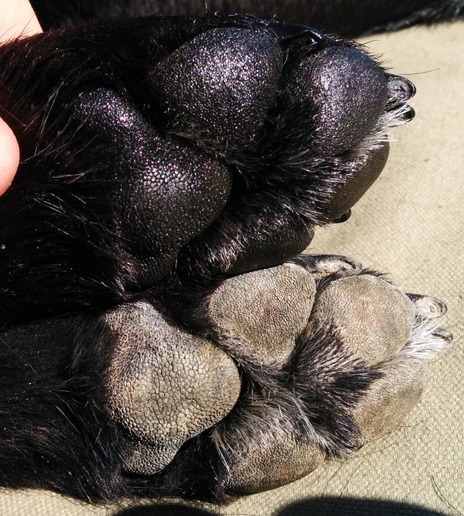 Treated Paw (Top) vs Untreated Paw