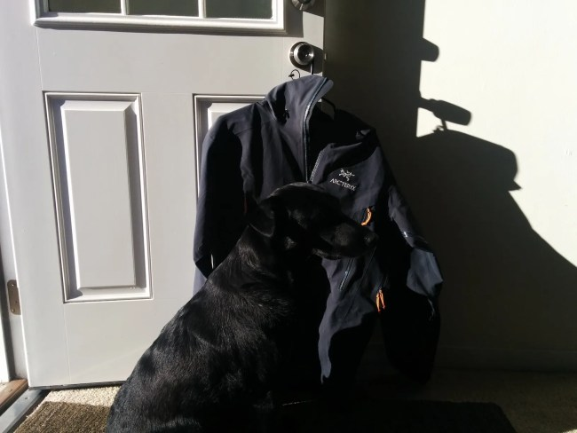 Willow sitting next to our newly-returned Arc'Teryx jacket