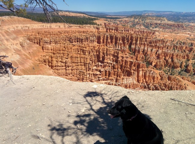 Willow Sitting Noticeably Farther From This Cliff Side At Inspiration Point