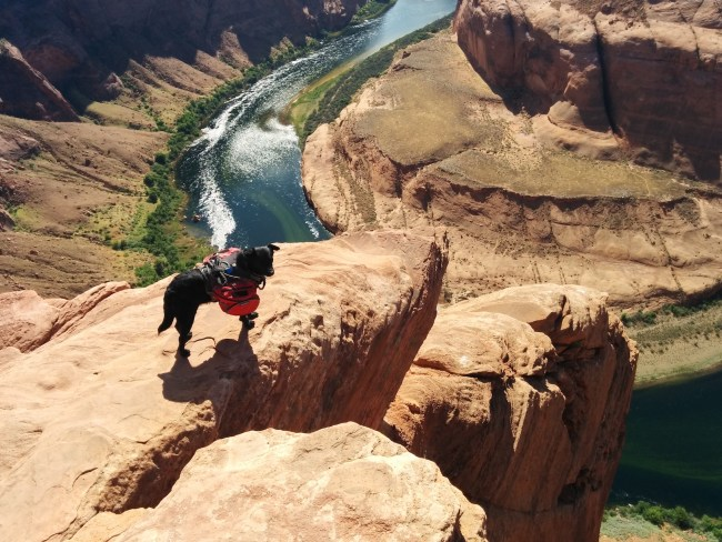 "Willow on a rock ""diveboard"" overlooking the Colorado River at the Horseshoe Bend overlook"