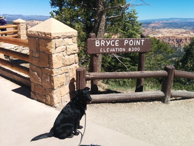 Willow sitting next to the Bryce Point sign