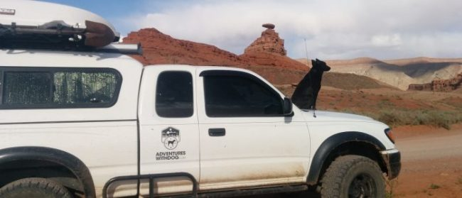 Willow on the hood of the Tacoma ears swept back by the wind with the Mexican Hat Rock Formation in Utah behind her