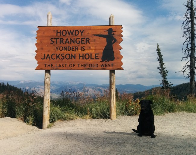 "Willow in front of ""Yonder is Jackson Hole"" sign"