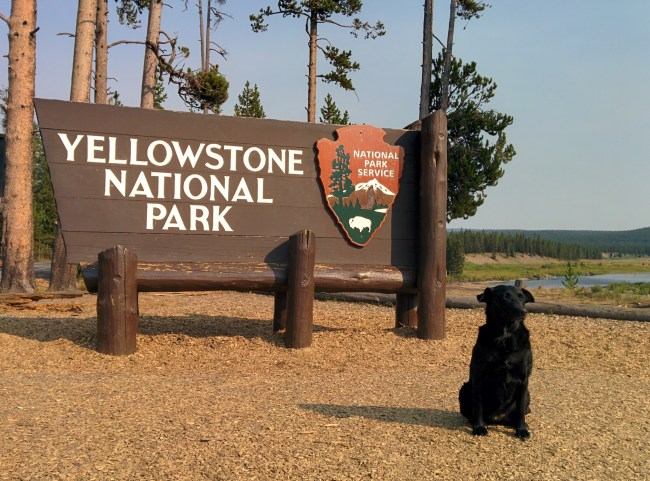 Willow sitting in front of the Sign At The South Entrance
