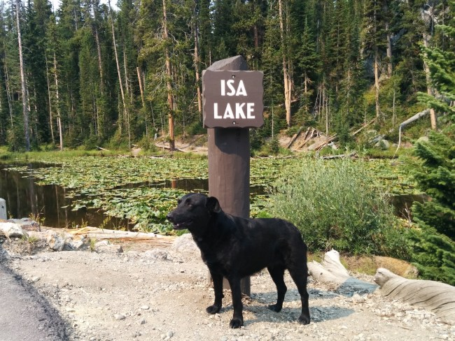 Willow next to the Isa Lake sign, lily pads covering the lake in the background