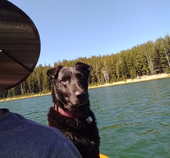 Willow on the kayak in the water with an intense gaze