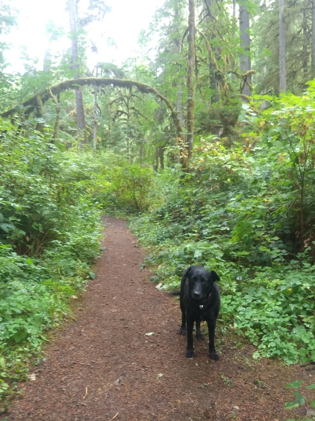 Willow standing in front of a tree arch over the trail