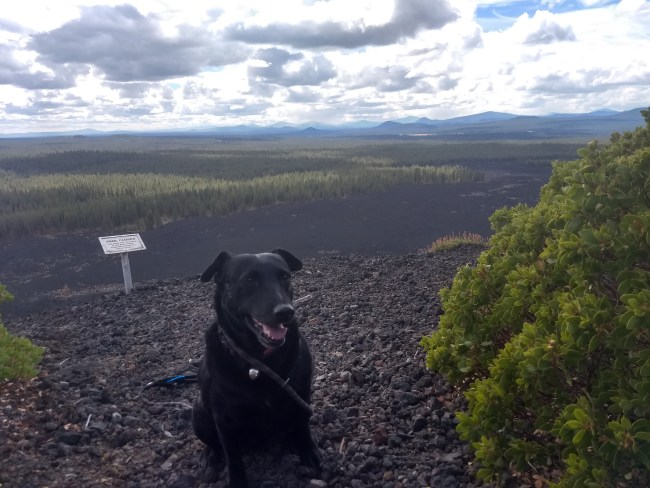 Willow sitting at the edge of the cinder cone looking out towards the 7000 year old lava flows