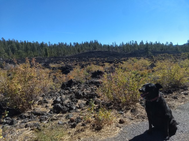 Willow sitting on the paved trail with an Obvious Limit Of The Lava Flow in the background