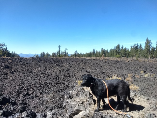 Willow standing in front of a Typical Lava Flow Zone In The Area