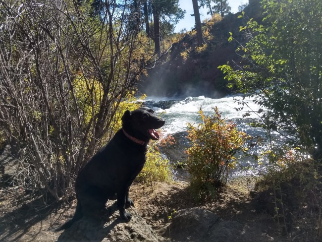 Willow yawning right above the Falls