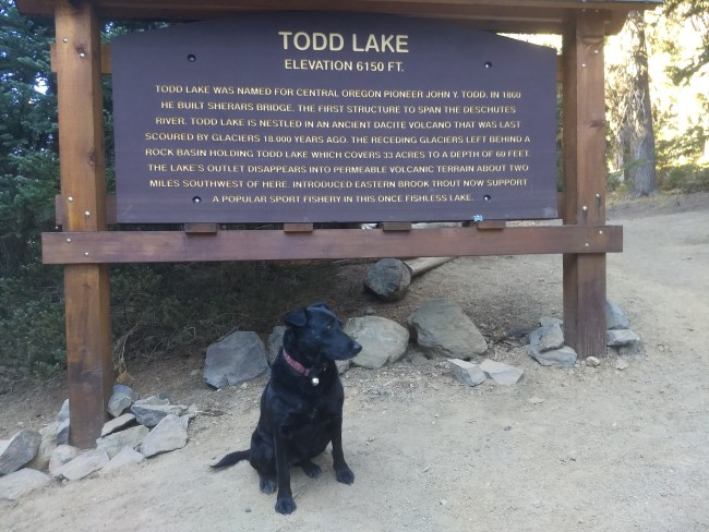 Willow sitting in front of the Todd Lake informational sign