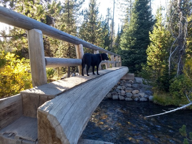 "Willow on log ""bridge"" going across Fall Creek"