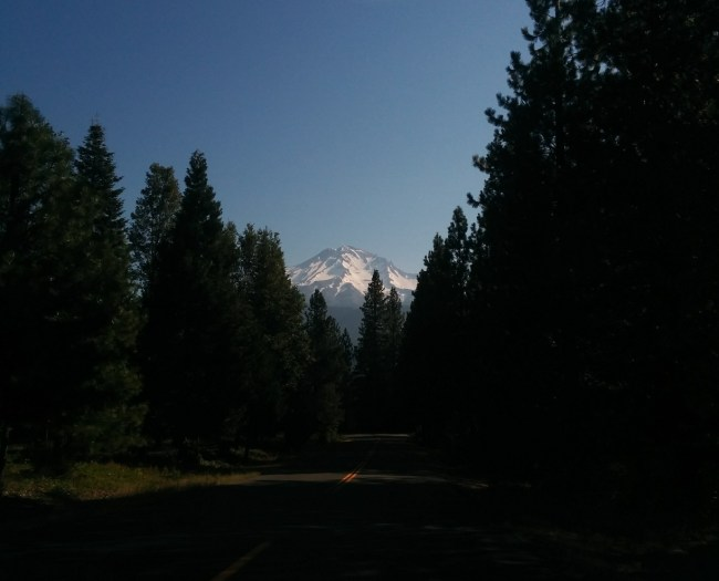 Mt. Shasta Through the trees