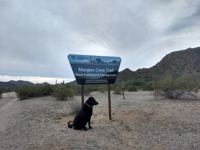 Willow in front of the Margies Cove Trailhead and Campground sign
