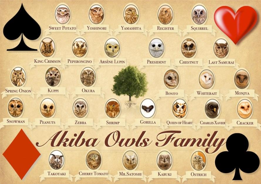 akiba_fukurou_owl_family