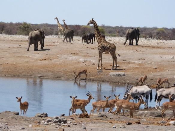 Namibia 11.13 691