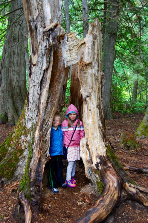 Top 5 family destinations in Glacier National Park. www.adventuringbeyond.com