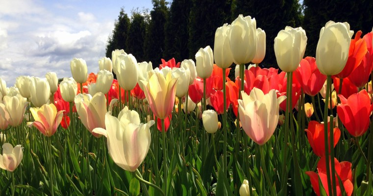 Tulips and State Parks and Bridges, Oh My!