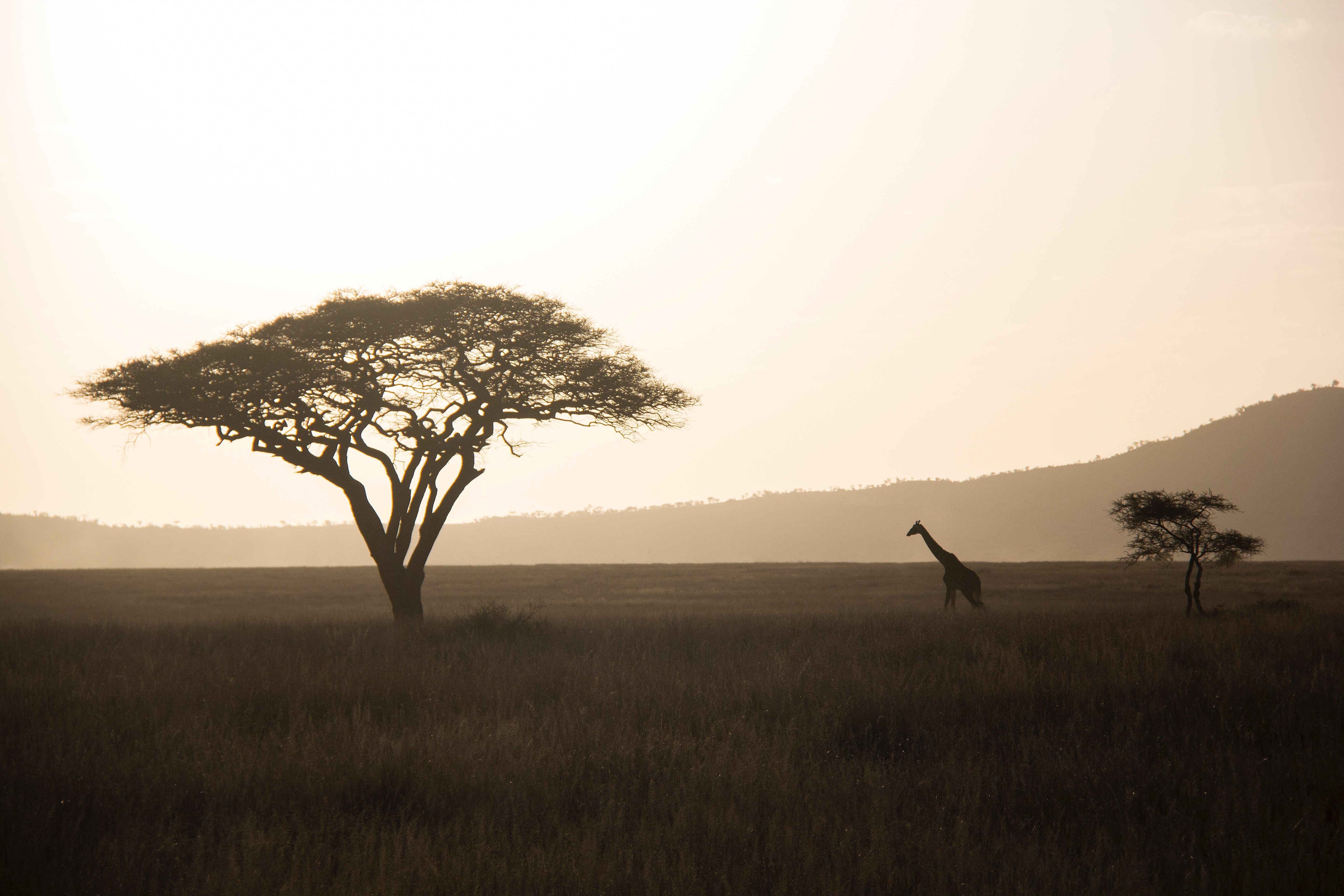 Visiting Tanzania: 7 Quick Tips For Your Trip