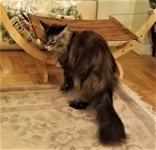 Rock Your Kitty, Literally in a Hammock by #Petmagasin