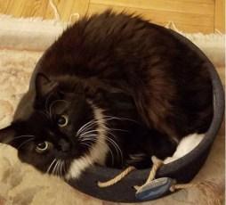 bob marley in petlinks scratch around cat toy