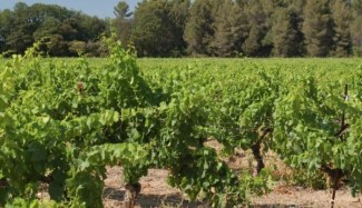 What's Up in Provence? Fine Wines, Of course!