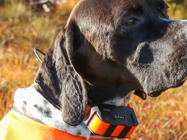Dog with a GPS in the necklace
