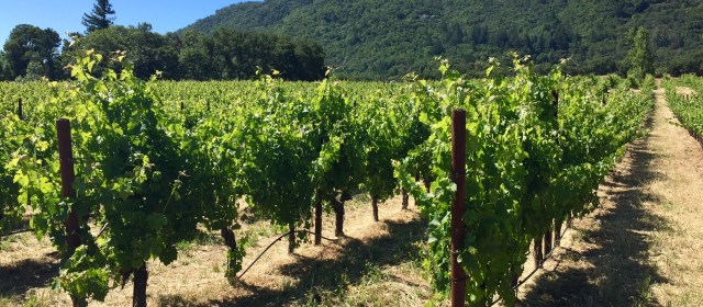 Laurel Glen Winery: The Evolution of a Great Cabernet Sauvignon