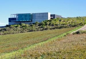 Stellenbosch South Africa Wine