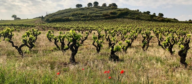 Bodegas Guzmán Aldazabal: Authenticity in the Heart of Rioja