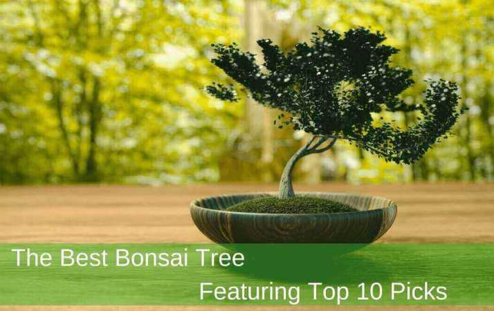 Best Bonsai Tree