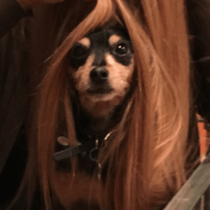 Meet Gina's dog Shadow who is channeling his inner Rapunzel.