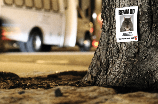 Rodent Control Company dCON Puts Missing Posters for Mice