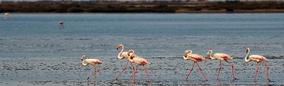 Visita al Delta del Ebro para socios de la AECC