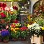Florists Insurance Aegis Insurance Financial Services