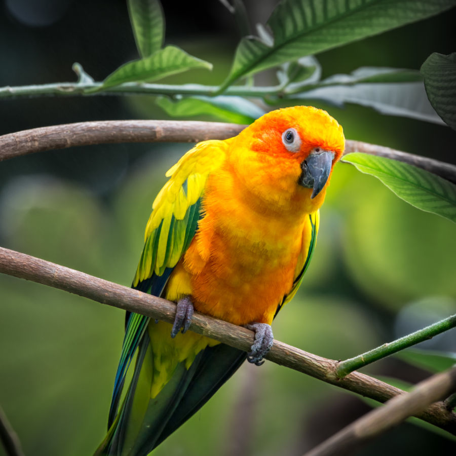 parrot care ae james