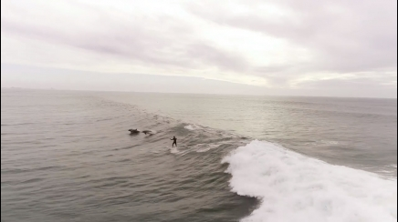 surfista e delfini insieme