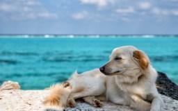 ペットの供養方法