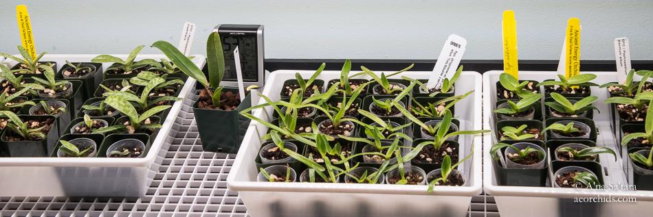 LED lights for orchids seedling deflask